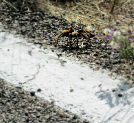 Apache Trail 2 027