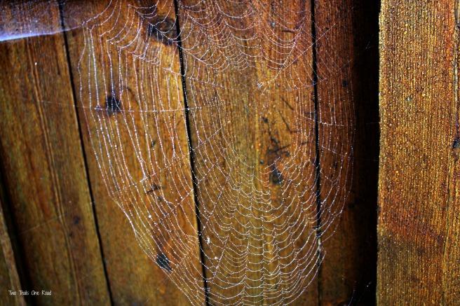 spiderwebs 004 - Copy