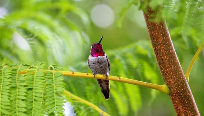 HummingbirdDesertKarenBillJeanne 006